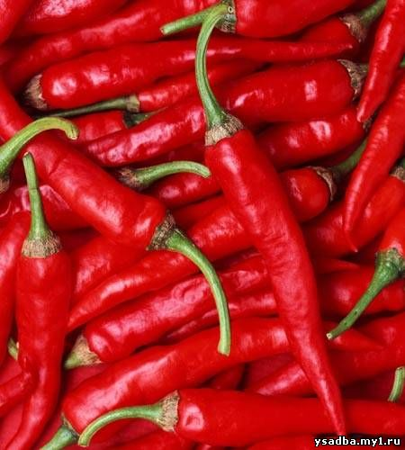 http://www.michiganmicrofarms.com/files/QuickSiteImages/California-Wonder-Sweet-Pepper.jpg